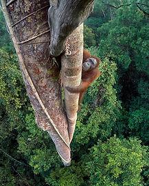 orang-hutan-2807834_1280.jpg