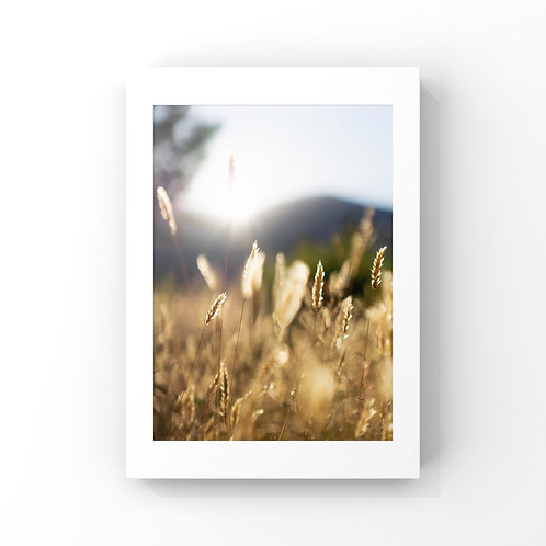 Field of Freedom - White Frame - Select Size