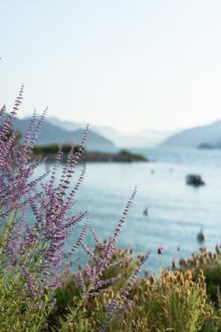 Lilac Ocean - Landscape Photography