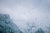 Mountain Life - Spirit Bird Media