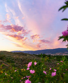 Okanagan Sunset - Spirit Bird Media
