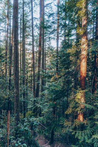 Forest Therapy - Spirit Bird Media