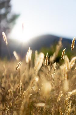 Bright light - Landscape Photography