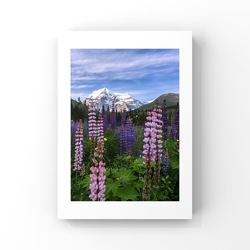 Mount Robson Wildflowers - Canvas Print - Select Size