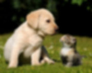 Cute-Puppy-Kitten-2880x1800-620x388.jpeg