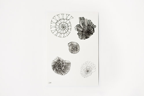 Fossilis Greeting Cards