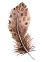 541-5416753_bird-feather-euclidean-vecto