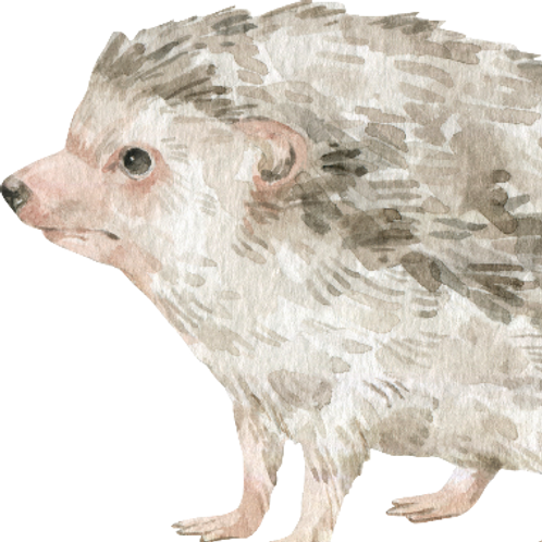 Hedgehog Watercolor Animal Printable