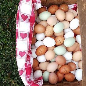Rainbow Eggs.jpg