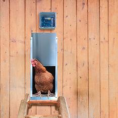 Automatic Chicken Coop Door.jpg