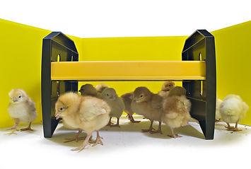Brinsea EcoGlow Chick Brooder.jpg