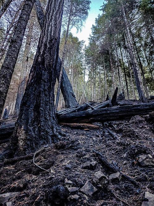 Burned in the Wild