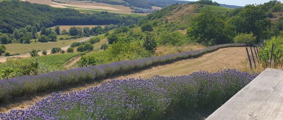 Lavendeleck Heerkretz
