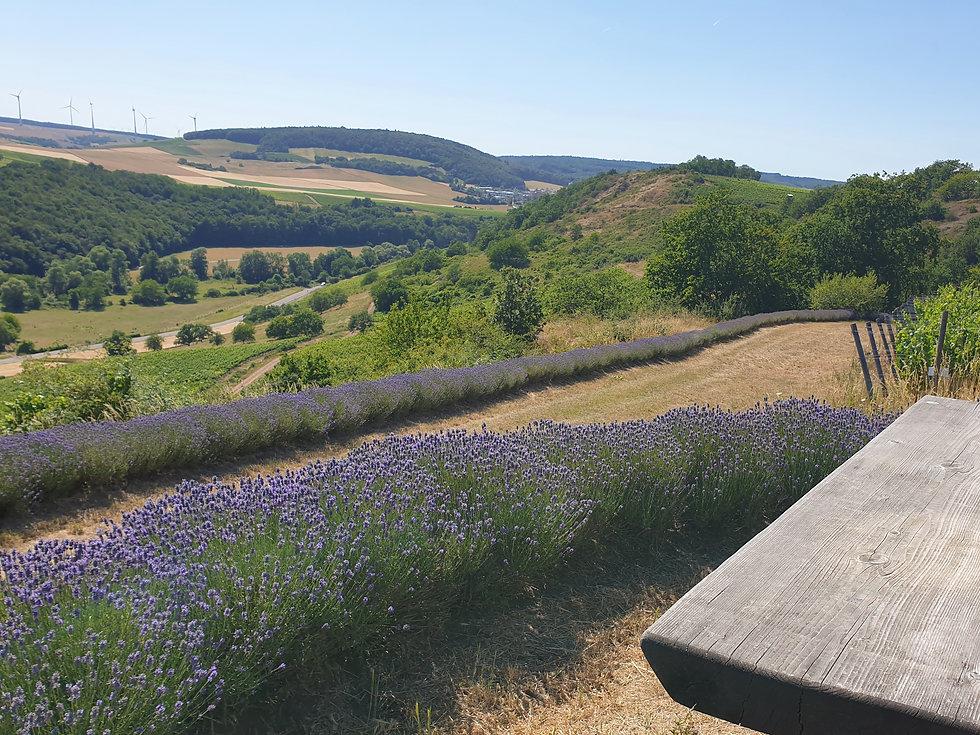Lavendeleck 1.jpg