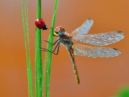 Semaine 7 : Les insectes