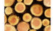 pulp-production_640x360.webp