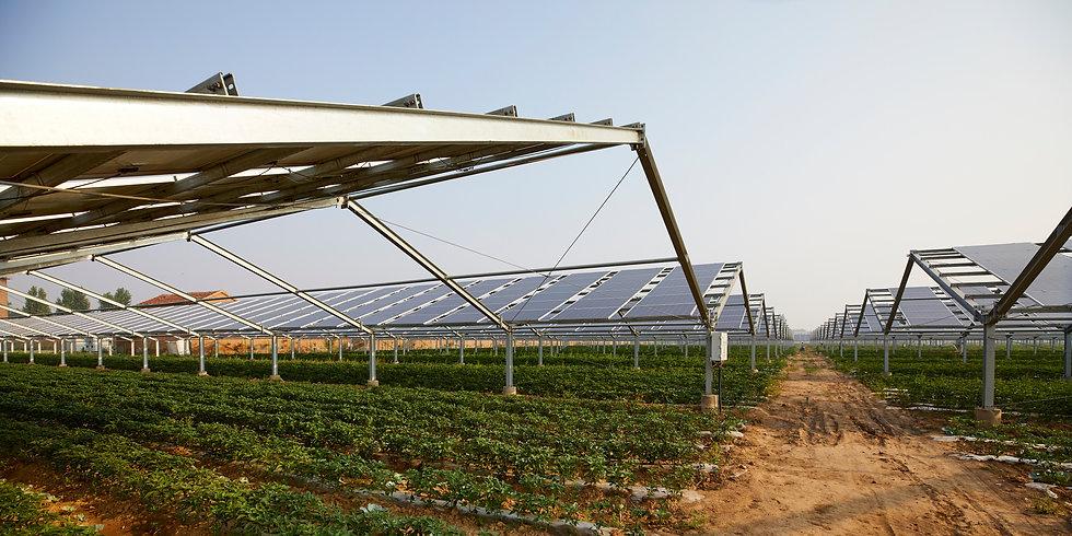 Luzentum - Agrovoltaica. Cultivo solar Alicante. Huerto solar Alicante. Placas solares para agricultura en Alicante.