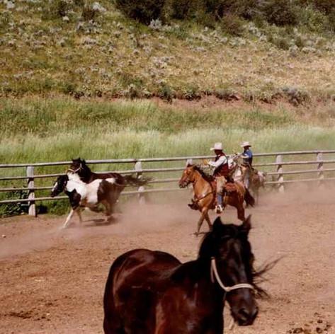 Saddlery Horses