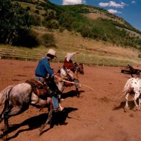 Saddlery Horse Wrangling