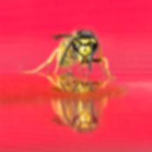 Wesp in primaire kleuren