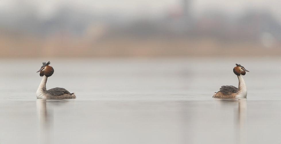 Fuu: op weg naar de pinguïndans