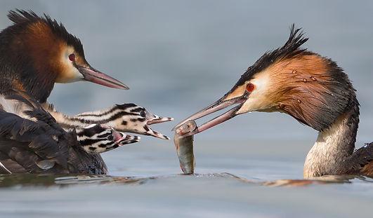 Bird photography; vogelfotografie; Eric van Roon