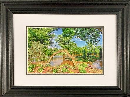 FCCA Water Garden (16x20 Framed)