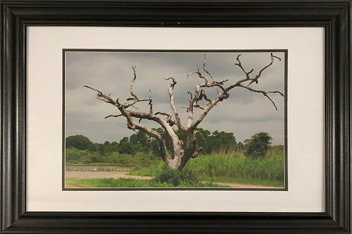 Coden Tree (20x28 Framed)