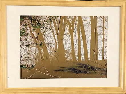 Reflective Trees (16x20 Framed)