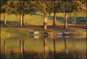 Bruce Park Fall Trees