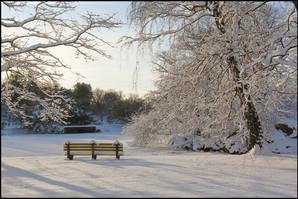 Bruce Park Winter