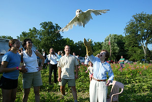 Owl Released