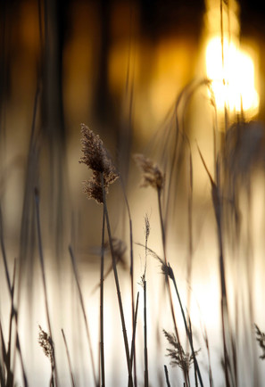 Tod's Wheat Stalk