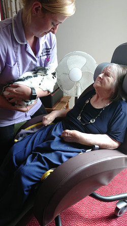 Pet rabbit been shown to a resident