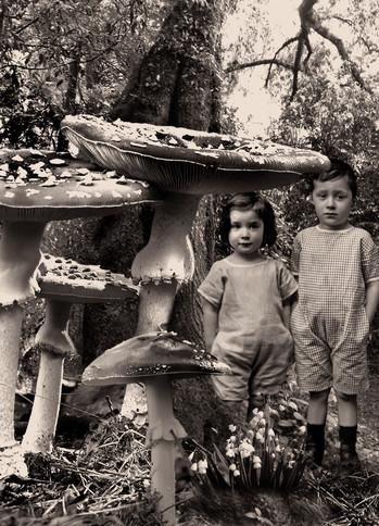 Fear of Mushrooms