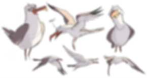 Seagull_exploration_3.png