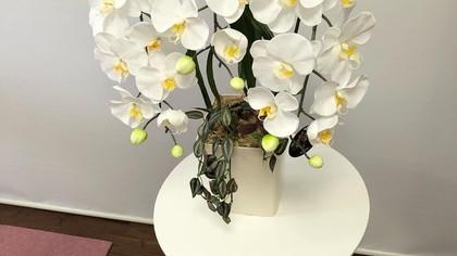 光触媒の胡蝶蘭が届きました💜