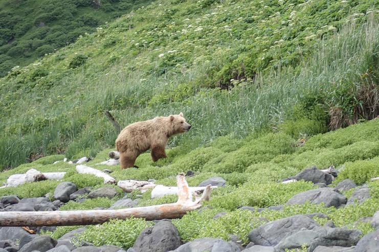 Alaska padler-17.jpg
