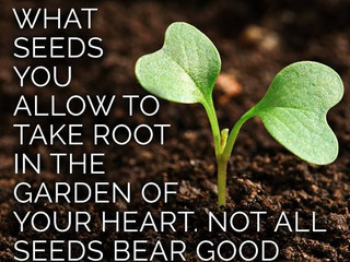 THE ROOT BEARS THE FRUIT