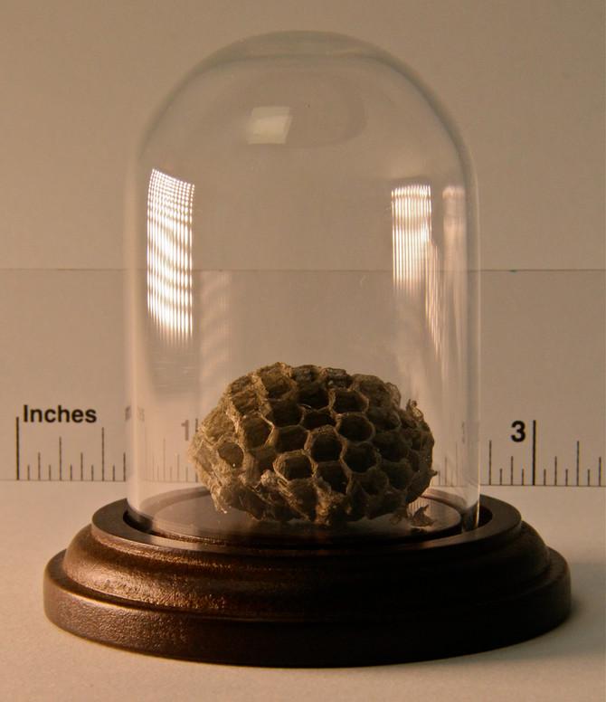 Tiniest Treasures Exhibit #1:  Wasp Nest
