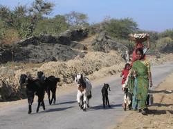 Udaipur+par+Gaelle+LUNVEN+32.jpg
