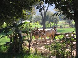 Udaipur+par+Gaelle+LUNVEN+46.jpg
