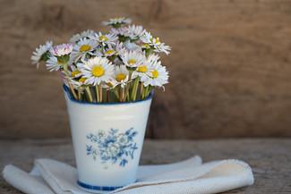 Gänseblümchen - diese 6 Verwendungsideen solltest du kennen