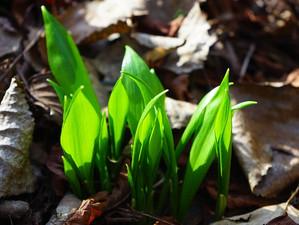 Frühjahrsmüdigkeit? Diese 4 Kräuter können helfen.