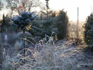Zima w ogrodzie...
