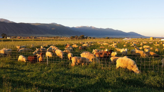 Addressing parasitism in the Intermountain West