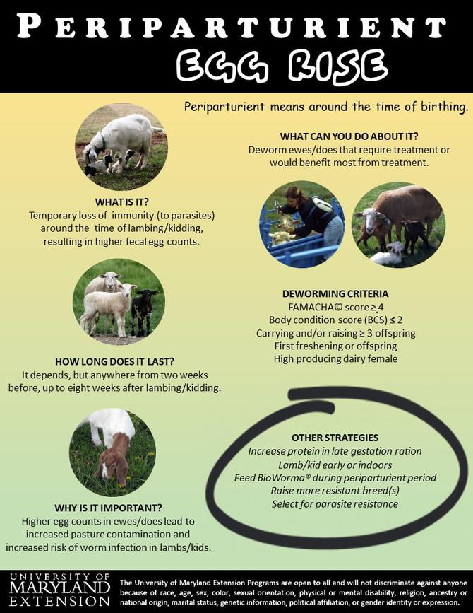 Infographic: Periparturient Egg Rise