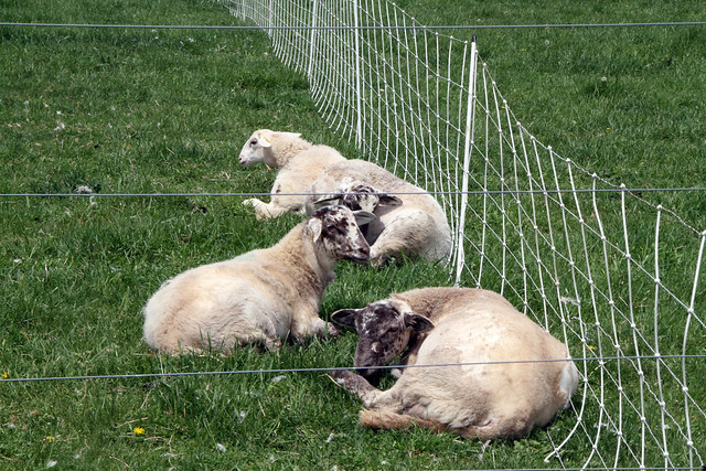 Killer pastures