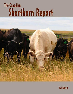 2020_10_shorthorn_report.jpg