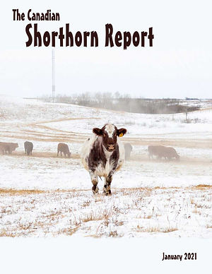 2021_01_shorthorn_report.jpg